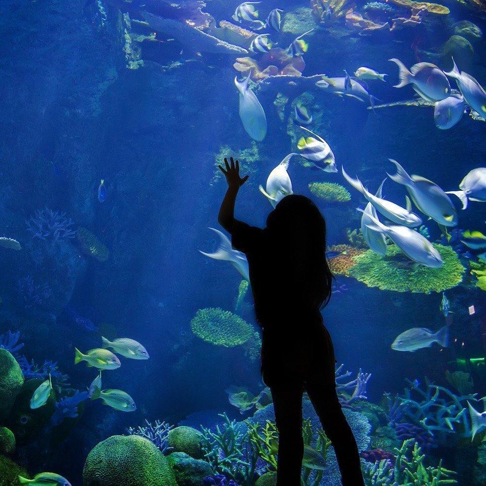 asian look up on underwater aquarium